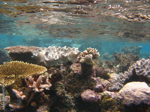 wyjatkowa-rafa-koralowa
