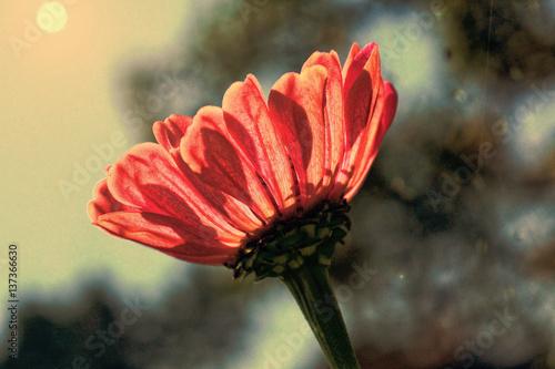 czerwony-kwiat-w-stylu-retro