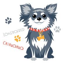 Cute Funny Dog Black Longhaire...