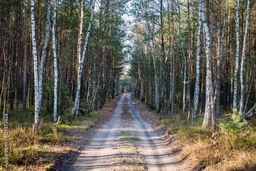 leśna droga - 137372826