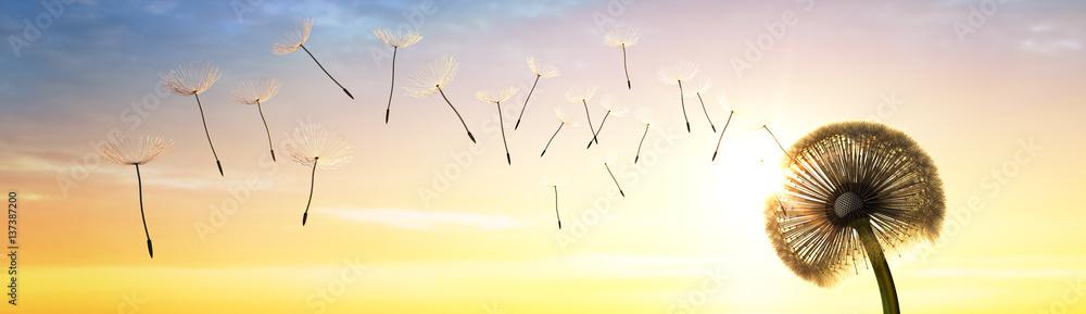 Fototapety, obrazy: Pusteblume im Sonnenuntergang 2