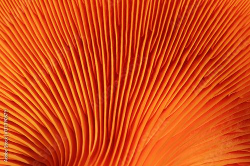 Türaufkleber Makrofotografie orange mushroom gills