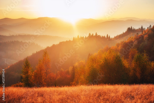 Photo sur Toile Morning Glory birch forest in sunny afternoon while autumn season.