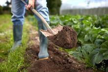 Man With Shovel Digging Garden...