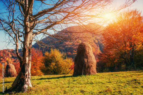 Staande foto Herfst mountain range in the Carpathian Mountains in the autumn season