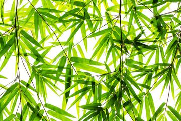 Fototapetabamboo leaves background