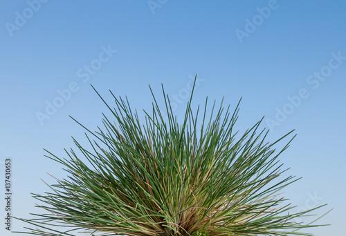 Fényképezés  Wild grass tussock