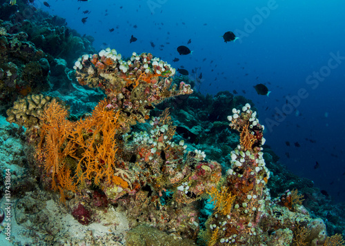 Poster Onder water Coral reef, Maldives