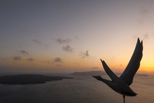 Silhouette Of A Goose As Decorative Detail Against Aegean Sea At Dusk In Santorini, Greece