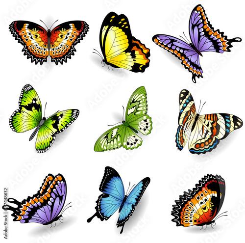 Fotografie, Obraz  Vector color butterfly illustrations