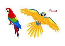 Ara Parrot Flat Design Vector ...