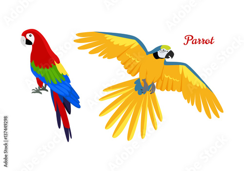 Canvas Print Ara parrot flat design vector illustration