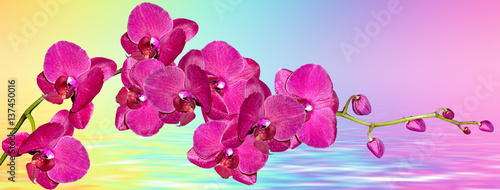 Colorful bright orchid flowers on a background of the summer landscape.