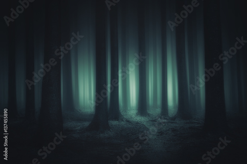 Photo  dark and scary forest