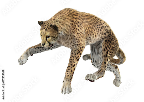 Deurstickers Luipaard 3D Rendering Big Cat Cheetah on White