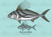 Roosterfish. Vector Illustrati...