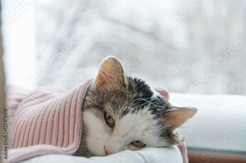 Chat cat lies on the window in winter