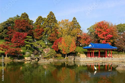 Foto op Canvas Japan 大阪府堺市 大仙公園日本庭園の紅葉