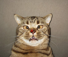 The Ladybug  Settles On Nose Of A Cat. He Is Surprised By This. He Got A Funny Look In His Eye.