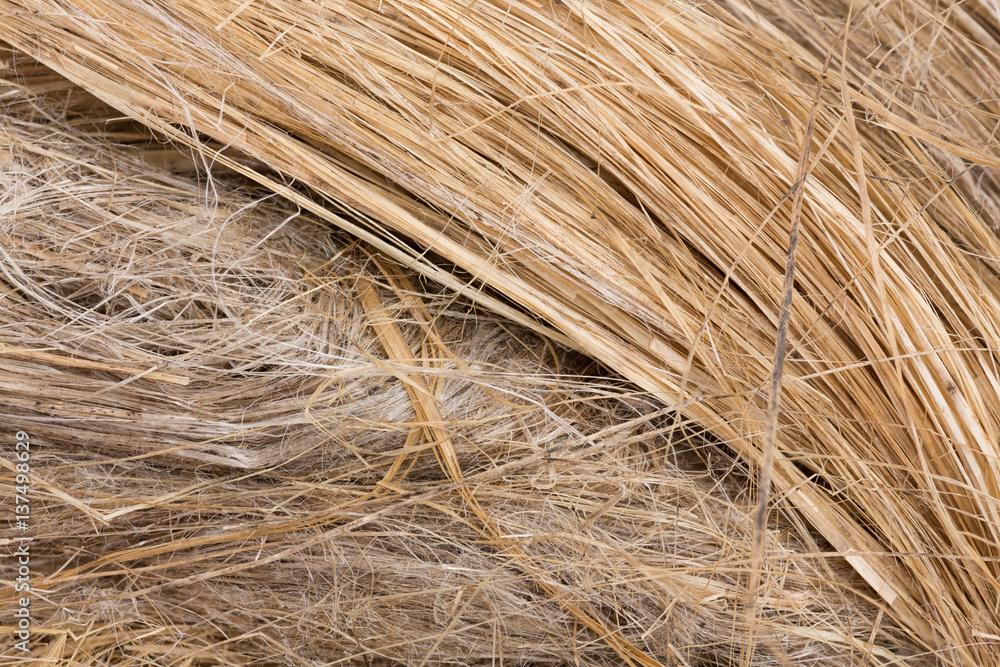 Fototapety, obrazy: raw flax fiber