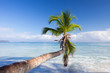 Caribbean landscape. One palm tree hanging over blue sea