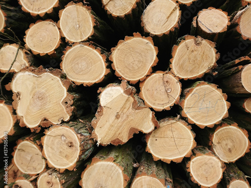 Obraz stos drzewa, posiekane pnie, drewno opałowe - fototapety do salonu
