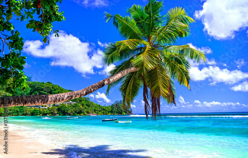 Staande foto Strand exotic tropical beach from dreams. Palm over turquoise sea