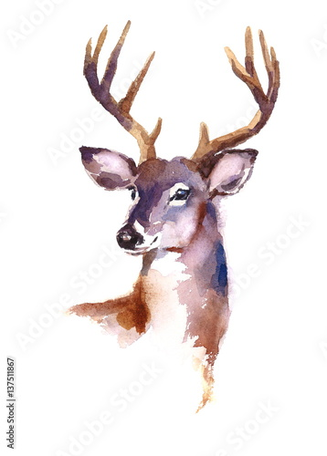 Fotografie, Obraz  Watercolor Deer Hand Painted Illustration isolated on white background