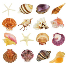 Collection Of Various Seashells, Isolated On White Background.