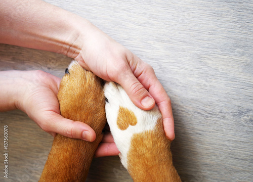 La pose en embrasure Chien Dog paws with a spot in the form of heart and human hand close up, top view. Conceptual image of friendship, trust, love, the help between the person and a dog