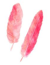 Watercolor Flamingo Feathers