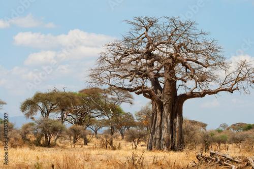 In de dag Baobab Baobab Trees in the African grassland, Tanzania