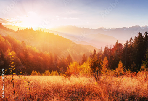 Aluminium Prints Autumn mountain range in the Carpathian Mountains in the autumn season.