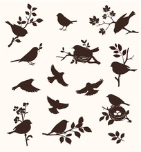 Vector Set Of Spring Bird And ...