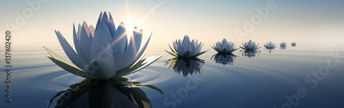 Foto-Schiebegardine ohne Schienensystem - Lotusblüten im Sonnenuntergang (von peterschreiber.media)