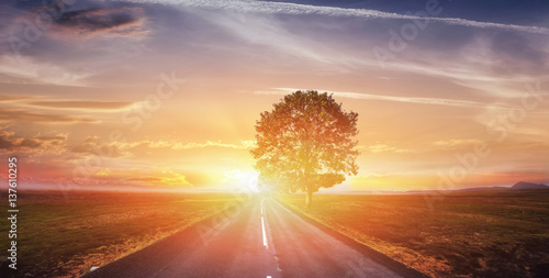 Fantastic landscape asphalt road and lonely tree at sunset. A be