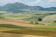Farming Fields - Spain