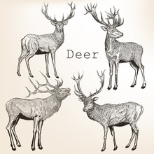 Set Of Vector Vintage Styled Engraved Hand Drawn Deer Animal Hunting Season