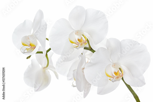 In de dag Orchidee The branch of orchids on a white background