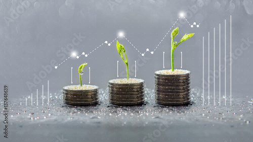 Photo  trees growing on coins, business with csr practice, Save and growing finance