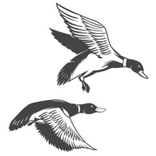 Set Of Wild Ducks Icons Isolat...