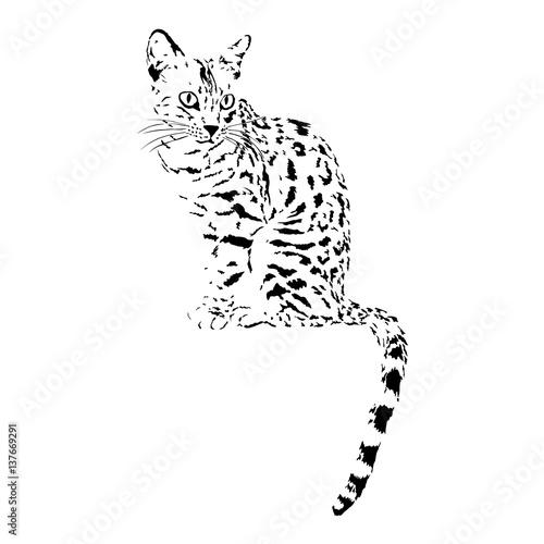 bengal cat, isolated animal vector illustration, tattoo Wallpaper Mural