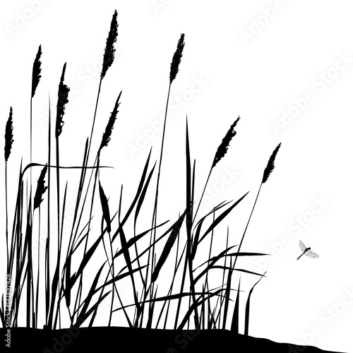Leinwand Poster Reed and flying dragonfly - black and white vector illustration