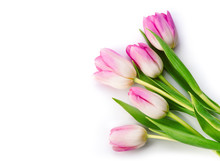 Bunch Of Purple Tulips Isolated On White Background