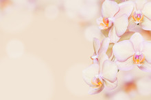 Peach Orchid Background