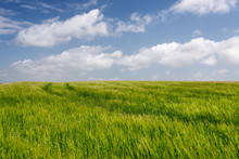 Light Grassy Field With White ...