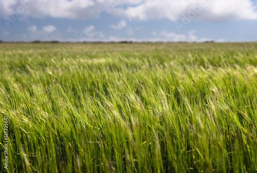 Montage in der Fensternische Gras Light grassy field with white fluffy clouds