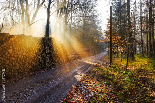 Foto op Canvas Weg in bos Sunrise in a forest near Friedeburg