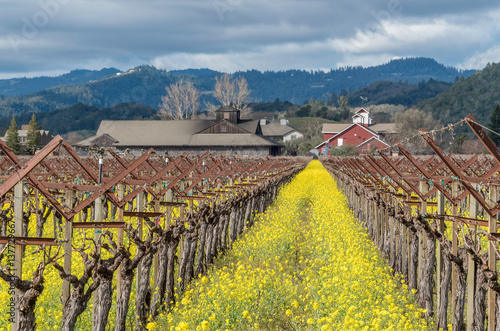 Winery with flowering mustard Poster
