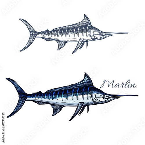 Fotomural Marlin fish vector isolated sketch icon